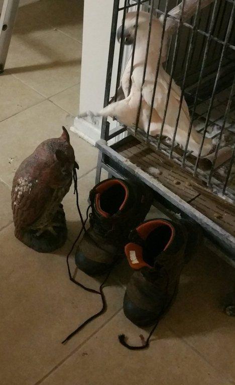 Owl Boots.jpg